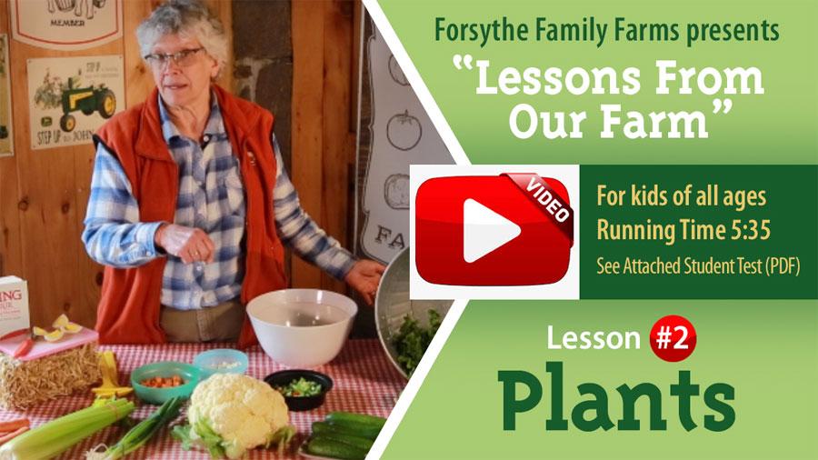 Lesson # 2 - Plants